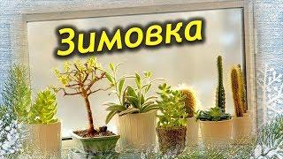 видео Период покоя у комнатных растений