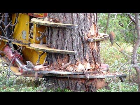 Extreme Wood Cutting Machine, Amazing Tree Splitter - NEW MACHINES TECHNOLOGY