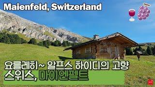 🇨🇭 스위스산책 - 하이디의 고향, 포도밭 가득한 마이엔펠트[Maienfeld]와 그 옆 아울렛[Landquart]을 다녀왔어요.