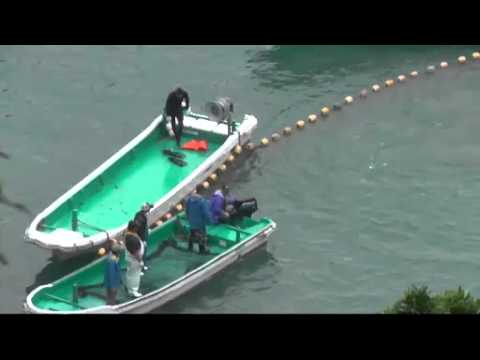 100+ Dolphins Terrorised Tormented Abused Kidnapped Slaughtered Taiji Japan