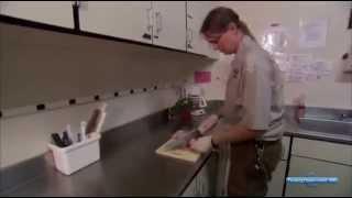 Документальное кино: Жизнь отвратительных животных (Discovery)