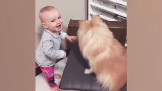 Funny Baby and Dog Fails Moments - Baby and Dog Videos