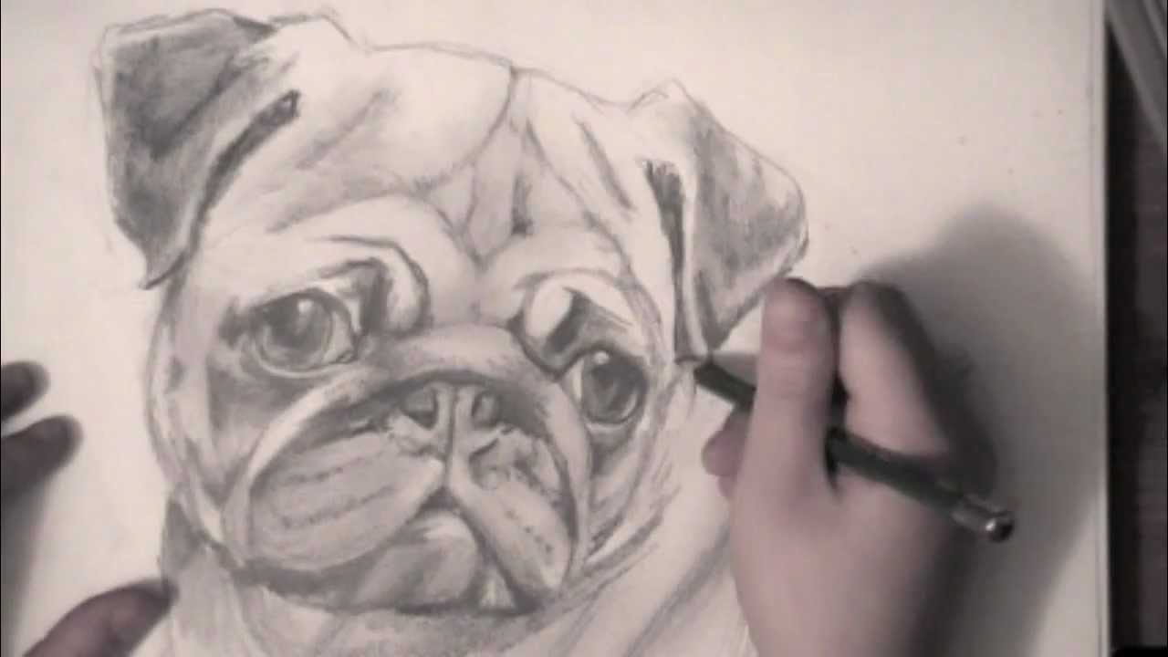 drawing a pug youtube