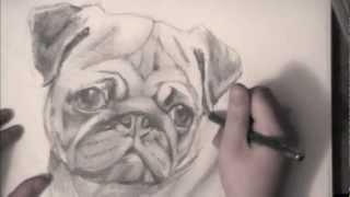Drawing A Pug