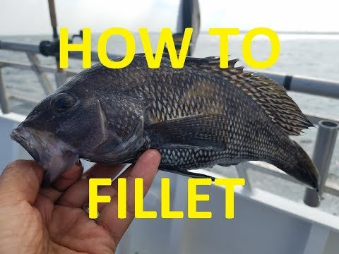 (Black) Seabass!! - Fillet And Release!! How To Fillet A (Black) Seabass!