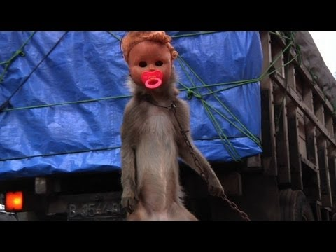 Street raiders pounce to end Jakarta's monkey business