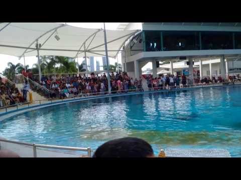 Complete Pink Dolphin Show - Underwater World - Sentosa Singapore