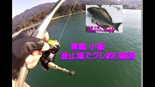 舞鶴小橋の波止場でグレ釣り10月27日
