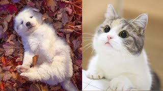 Cute baby animals - Beautiful puppies, Cute kittens, Funny pets