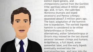 Human evolution - Wiki Videos
