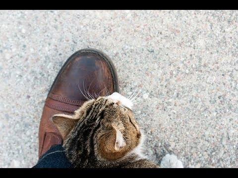 cat-skin-care-dandruff