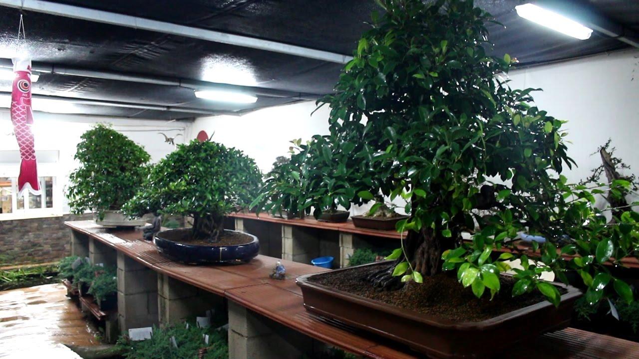 La estanter a de los titanes re ubicaci n de mis bonsai for Estanterias para bonsais