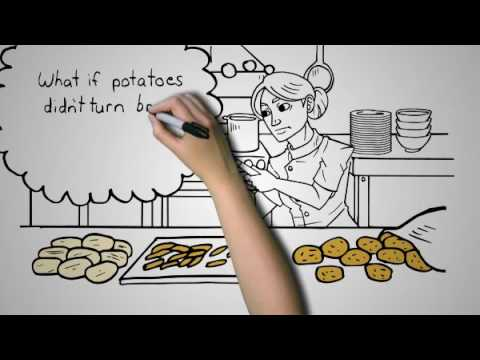 Genetically Modified Potatoes - GMO