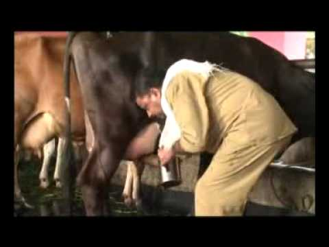 Animal Farming 3- Dairy production (Malayalam) a Documentary by Dr FX