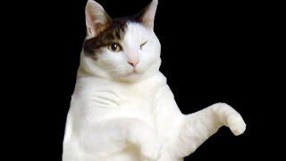 I'MA CAT I'MA KITTY CAT!!! | The Normal Elevator | Roblox