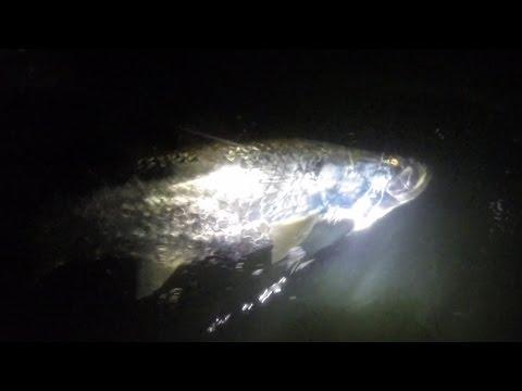 04.12.16 Tarpon Night Fishing