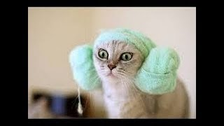 Try not to laugh to see funny animal synthesis   Funny animals #9