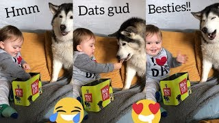 How To Make Besties With Huskies!!