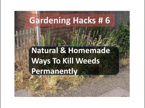Natural Ways To Kill Weeds Permanently - Gardening Hacks#6