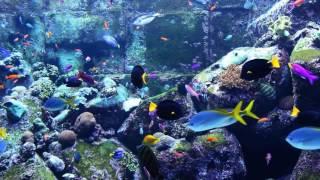 afslappende-musik-fisk-fra-koralrev