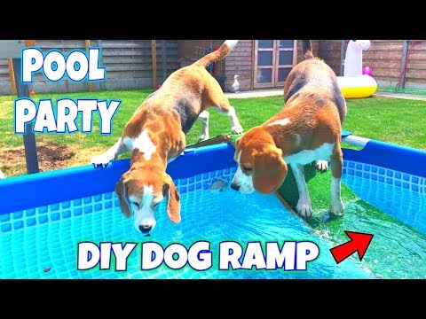 🌟💦Pool Party💦🌟 with a DIY DOG POOL RAMP and ✨UNICORN✨   Louie The Beagle