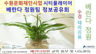 ★(베란다정원_공기정화식물/수경 테라리움 만들기 강의)…