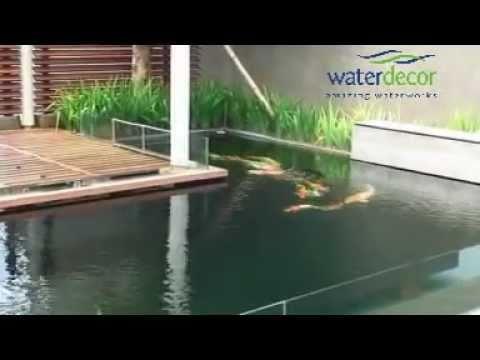 kolam ikan koi dengan nexus youtube