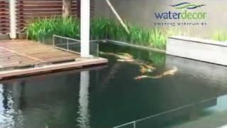 Kolam Ikan Koi Dengan Nexus
