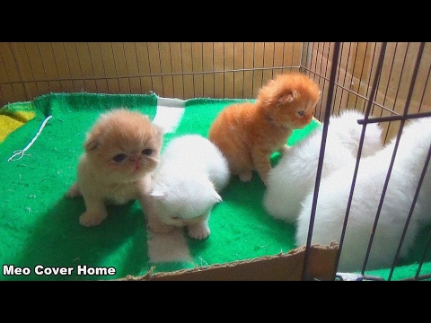 Kittens Open Eyes And Play Around So Cute | Funny Newborn Kittens 2017