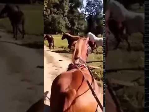 Wild horses in Lonia River Park Of Nature , Croatia.