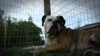 Furever Home Tv Episode Teaser - Puppy Mill Survivors