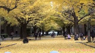 Japan Trip 2013 In main gate Hongo Campus Ginkgo tree-lined University of Tokyo  09