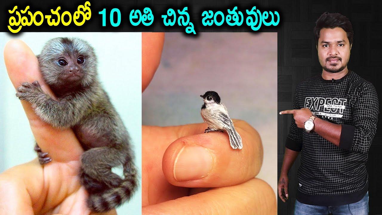 Top 10 Smallest Animals | Unknown Facts  | In Telugu | Vikram Aditya Latest Videos | #EP289