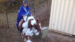 Dawn Welsh/quarter Horse Pony For Sale $2000 Obo