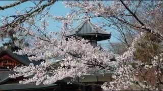 1018 Yoshinoyama walk HD