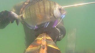 Pesca Sub: Arbalete 70 Vs Pesce Bianco Vol. II & Midland XTC 280