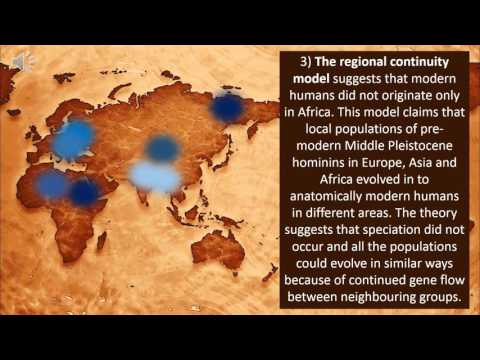 out of africa vs multiregional theory