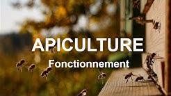 Le fonctionnement d'une ruche - Hors série Apiculture