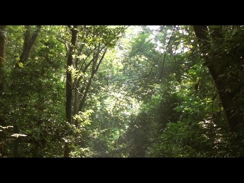 Bethuadahari Reserve Forest | HD video | West Bengal, India
