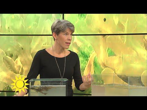 Östersjöfisken Rudan:s superkraft skyddar mot fienden - Nyhetsmorgon (TV4)