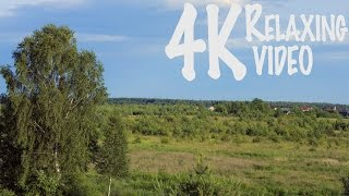 4K 1 hour video pleasing eye field with birch and pine!