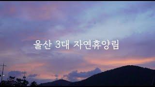 울산3대 자연휴양림 모토캠핑 ( 대운산 자연휴양림 │ 간월산 자연휴양림  │  신불산 자연휴양림 )