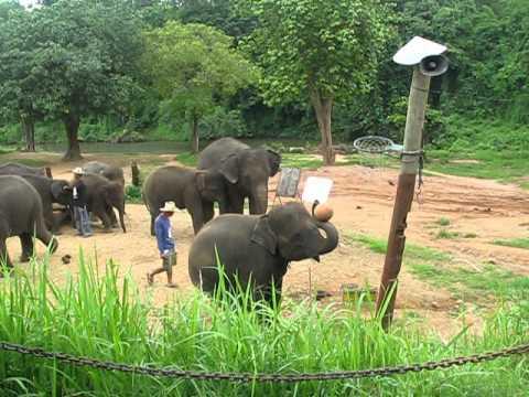 shooting an elephant vs salvation Elephant king stacks  vanuit de vurige binnenkant van onze planeet schieten we de ruimte in met shooting stars  in de categorie nieuwe spellen is er dus.