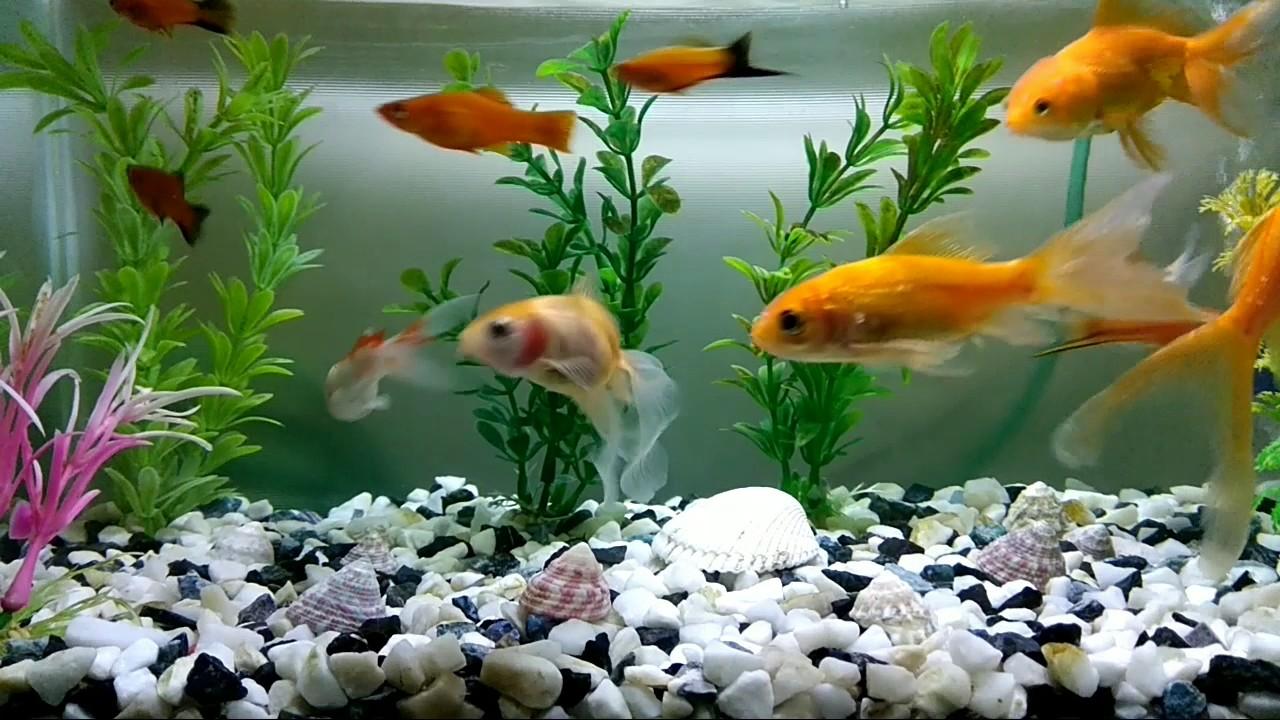 Small Fish Tank With Beautiful Fish Youtube