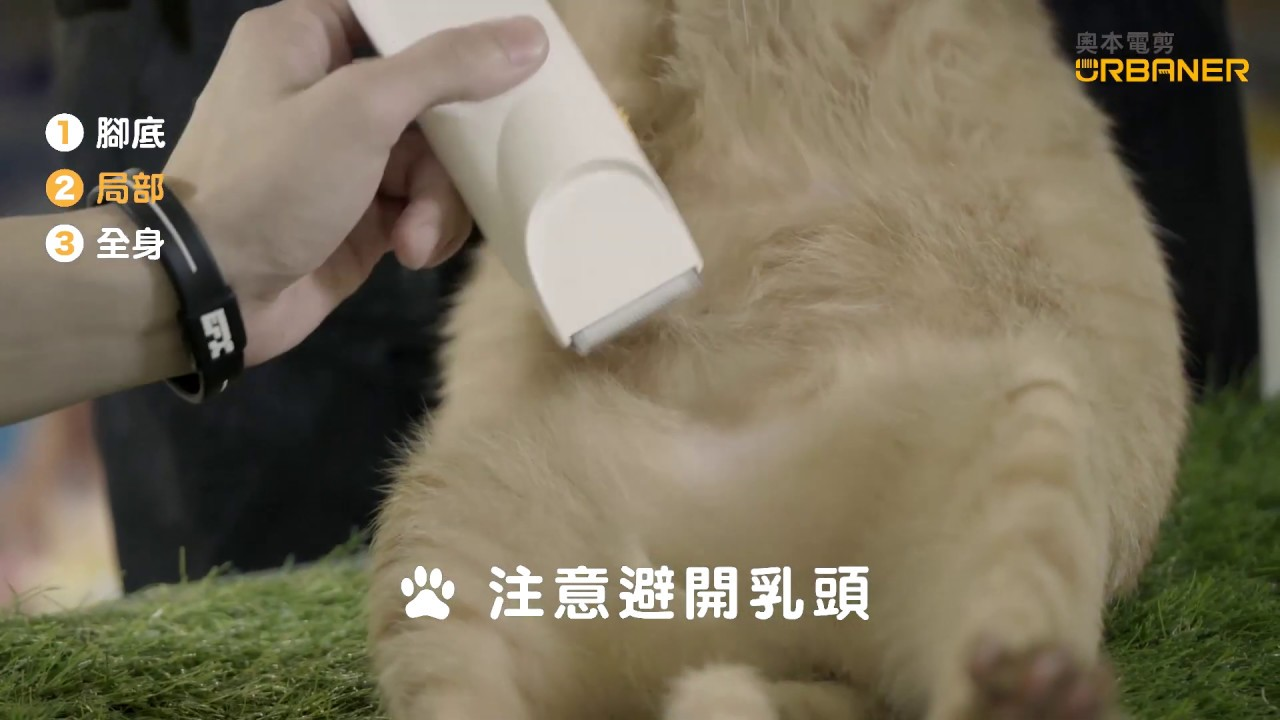 貓咪肚子毛修剪-奧本寵物經典款電剪(MB-033)肚肚毛修剪/局部修剪