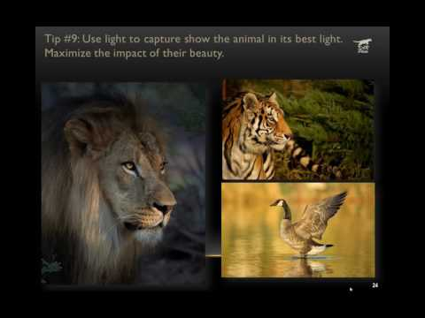 10 Wildlife Photography Composition Tips By Kathleen Reeder