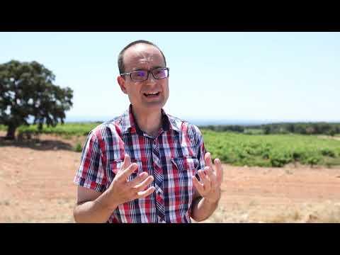 La temprana vocación comercial de los vinos de Utiel