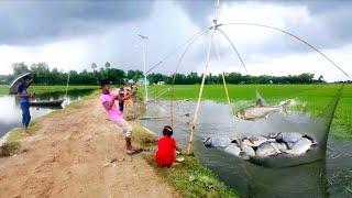 fishing,দেখুন মাথা নষ্ট করা মাছ ধরা পড়ল আমাদের গ্রাম।best fish hunting