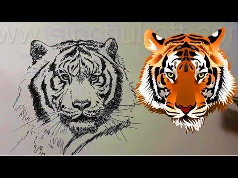 Как нарисовать тигра который лежит