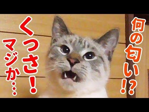 クサイけど堪んねぇ…!自分の大事なとこの匂いを嗅いだ猫のオモシロ顔がかわいすぎた
